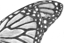 2015_10_09_Butterfly_Wing_mini