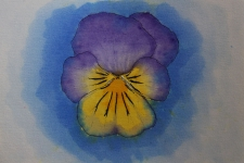 2017_04_21_Brusho_Pansy
