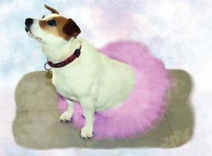 Lucy Vampoosy in a tutu